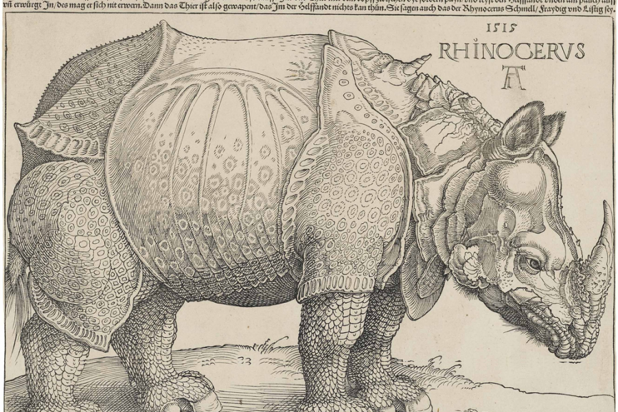 Woodcut of a rhinoceros by Dürer